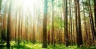 STF analisará constitucionalidade de dispositivo do novo Código Florestal